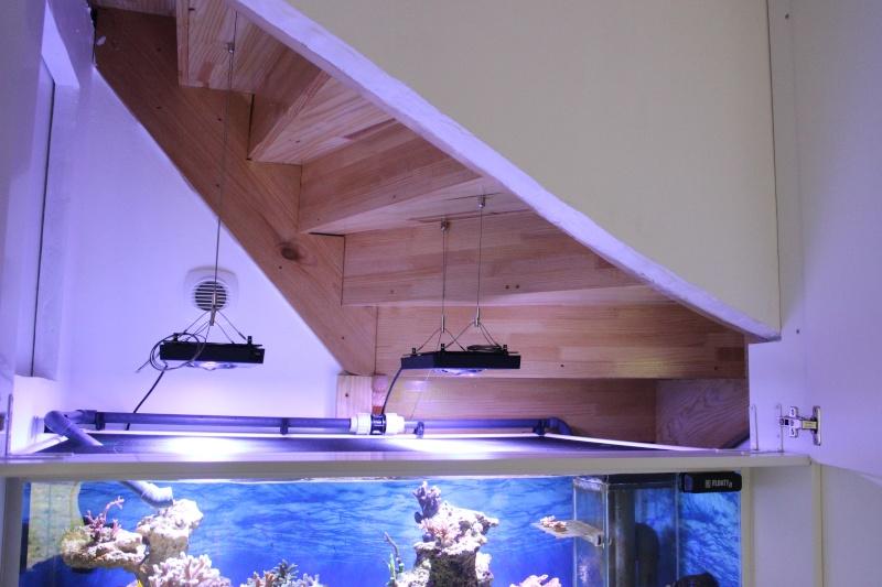 Le nouveau Reef d'Alexpilon, 600l custom Img_6014