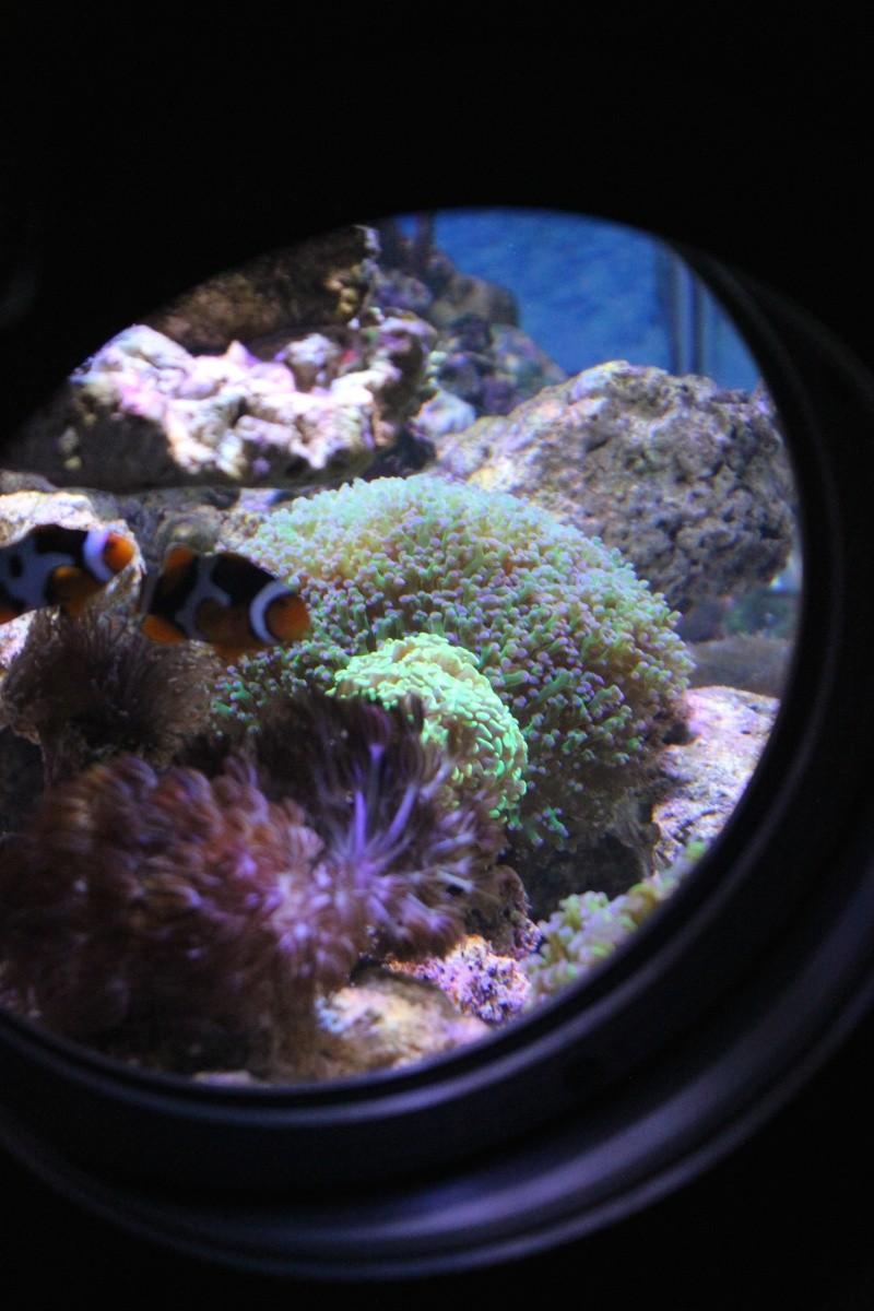 Le nouveau Reef d'Alexpilon, 600l custom Img_6017