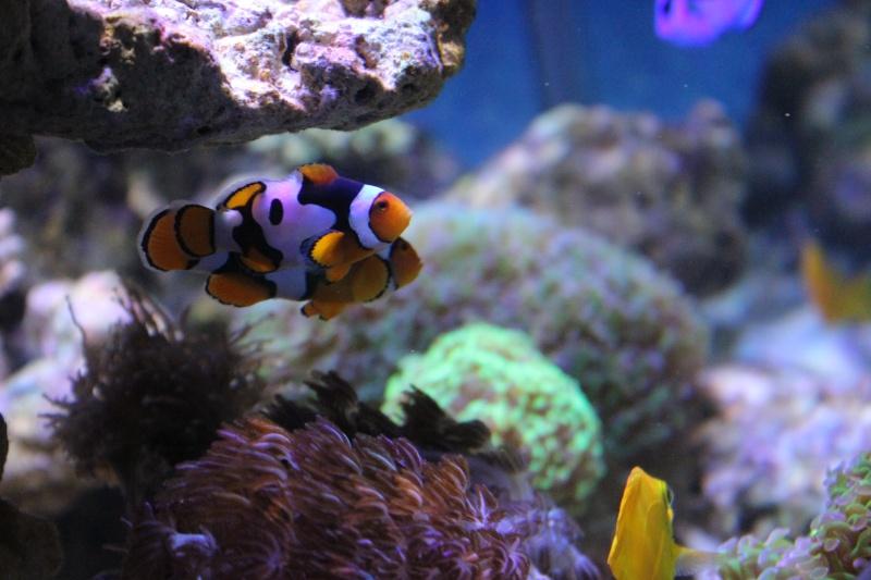 Le nouveau Reef d'Alexpilon, 600l custom Img_6018