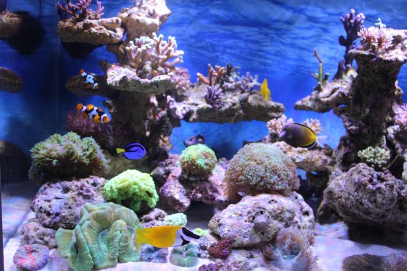 Le nouveau Reef d'Alexpilon, 600l custom Img_6020