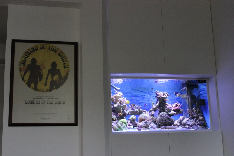 Le nouveau Reef d'Alexpilon, 600l custom Img_6021