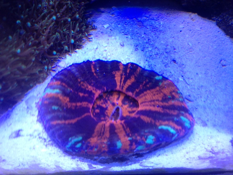 Le Red Sea Max 130D d'Alexpilon - Page 4 Scolim10