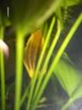 démarrage aquarium de 80L Hpim2120