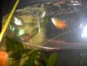 démarrage aquarium de 80L Hpim2126