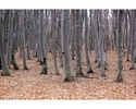 Assignment 10b: Photomorph Project due Apr 21 - Page 2 Treesn11