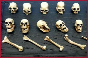 Une découverte de 100 ans  Skull-10