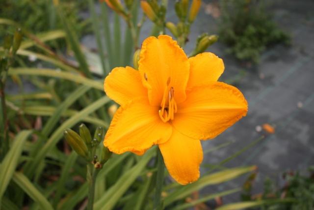 Mes Belles Inconnues Orange10