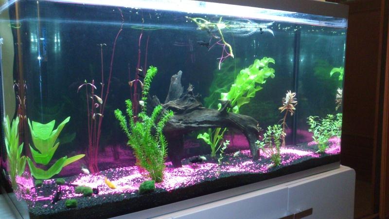 Evolution de mon aquarium Dsc_0012