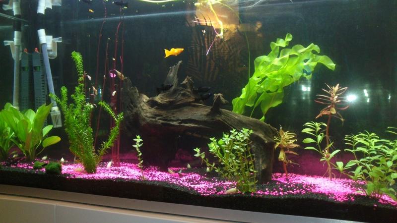 Evolution de mon aquarium Dsc_0013