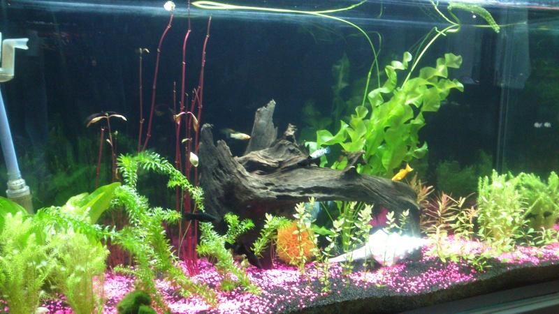 Evolution de mon aquarium Dsc_0110