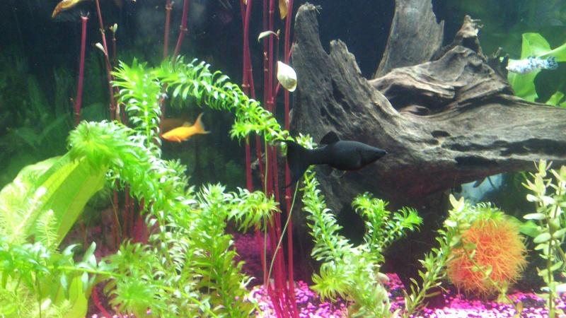 Evolution de mon aquarium Dsc_0111