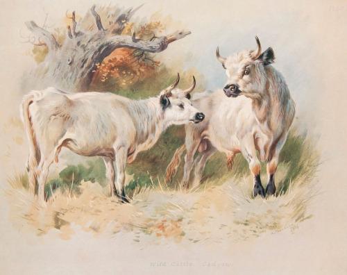 Les animaux peints à l'AQUARELLE - Page 5 Aq_v10