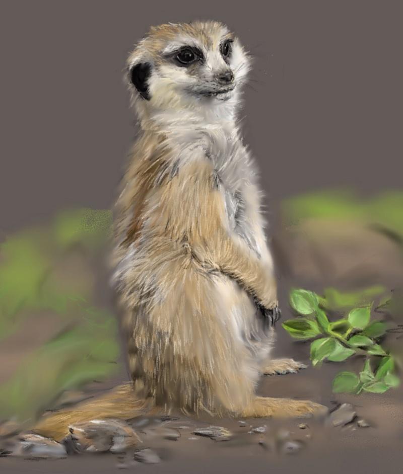 Les animaux peints à l'AQUARELLE - Page 6 Aqk10