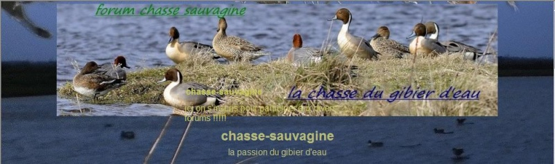 chassesauvagine