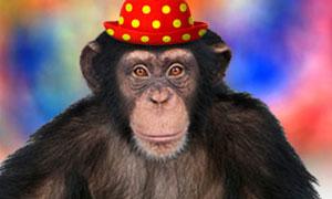 [lucasleretour] présentation de lucasleretour quinajamaisportésibiensonnom - Page 2 Chimpa10