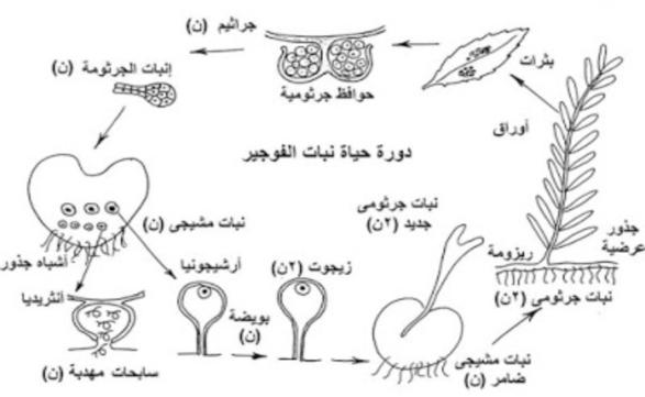 بالصور: جميع رسومات مادة الاحياء للصف الثالث الثانوي 1231