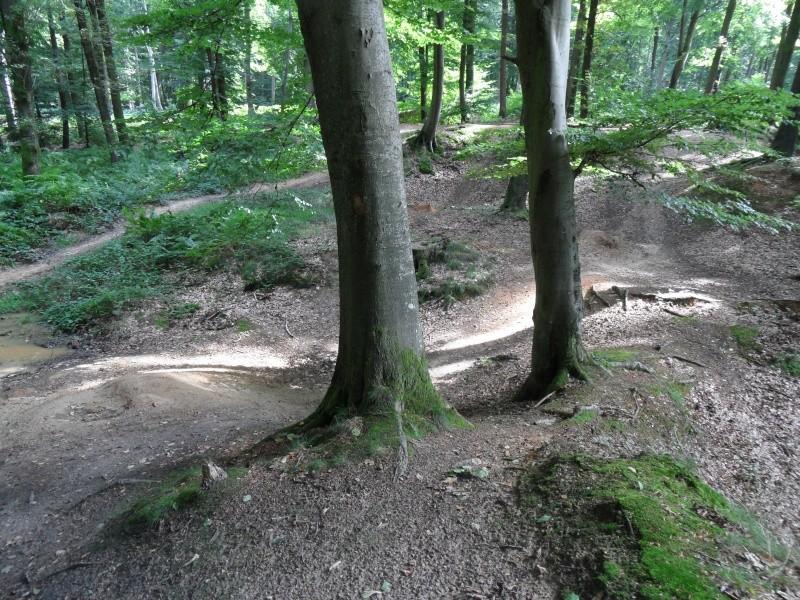 Sortie en forêt. Sam_2616
