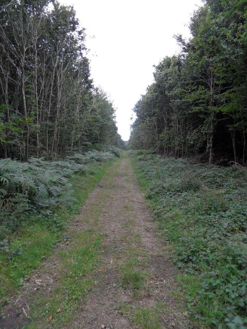 Sortie en forêt. Sam_2711