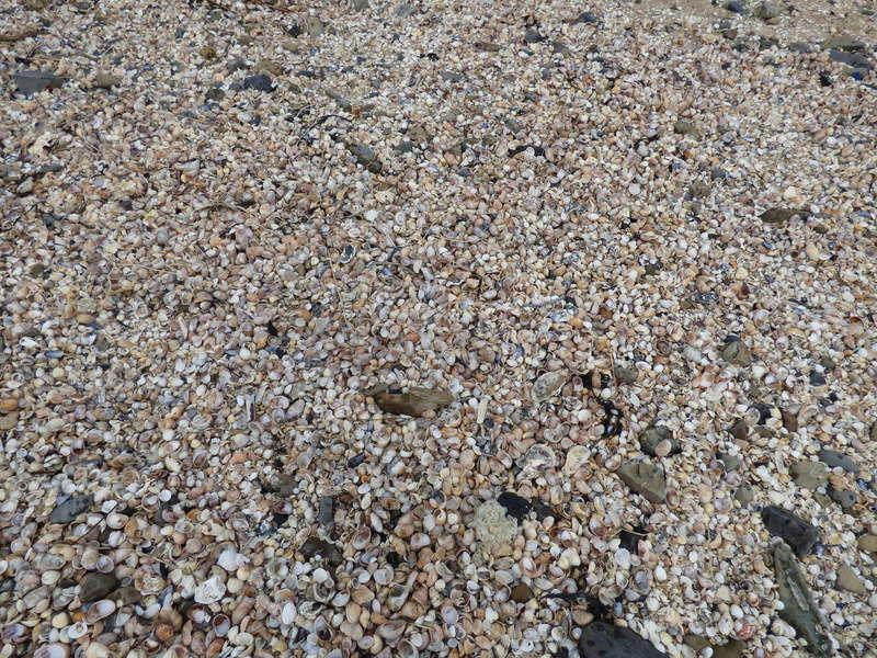 Sortie à la plage de carolles et à granville - 23 mars 2017 P1070992