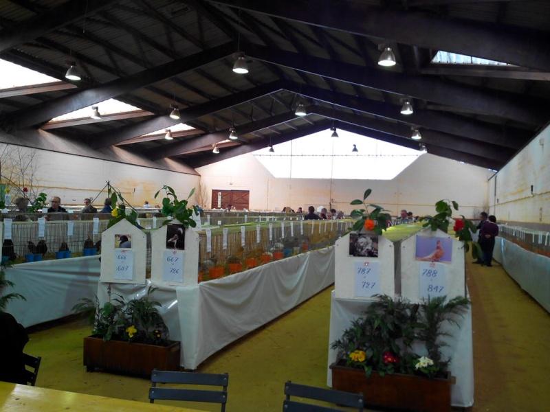 2014 - Exposition mars 2014 de Montmorillon (86) Img_2121