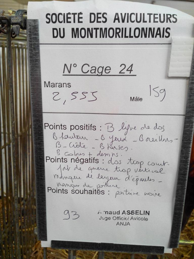 2014 - Exposition mars 2014 de Montmorillon (86) Img_2132