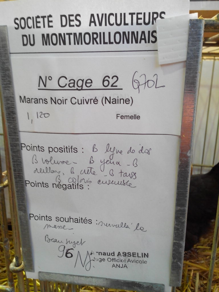 2014 - Exposition mars 2014 de Montmorillon (86) Img_2140