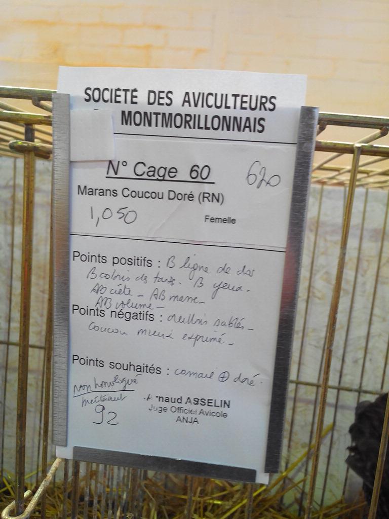 2014 - Exposition mars 2014 de Montmorillon (86) Img_2148