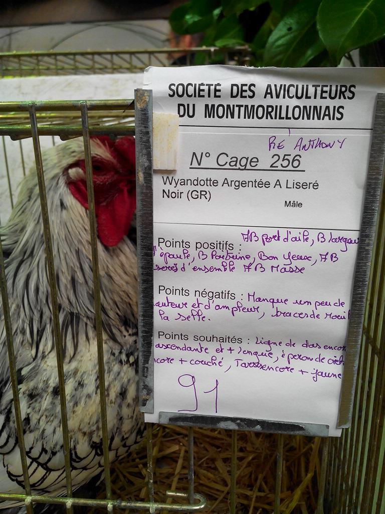 2014 - Exposition mars 2014 de Montmorillon (86) Img_2179