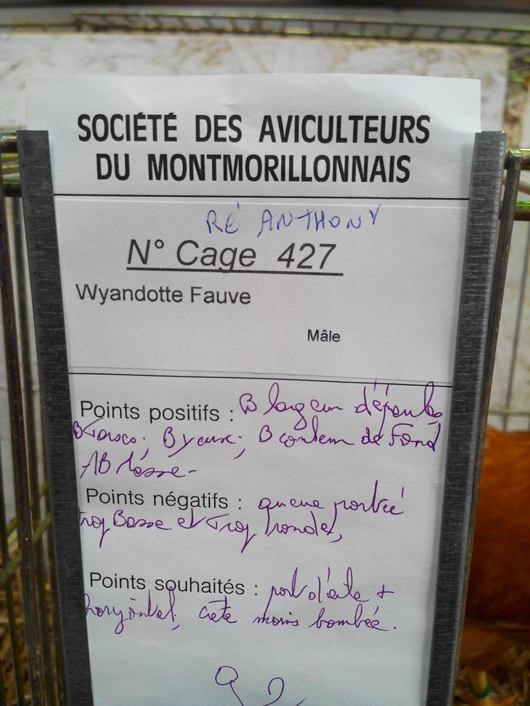 2014 - Exposition mars 2014 de Montmorillon (86) Img_2190