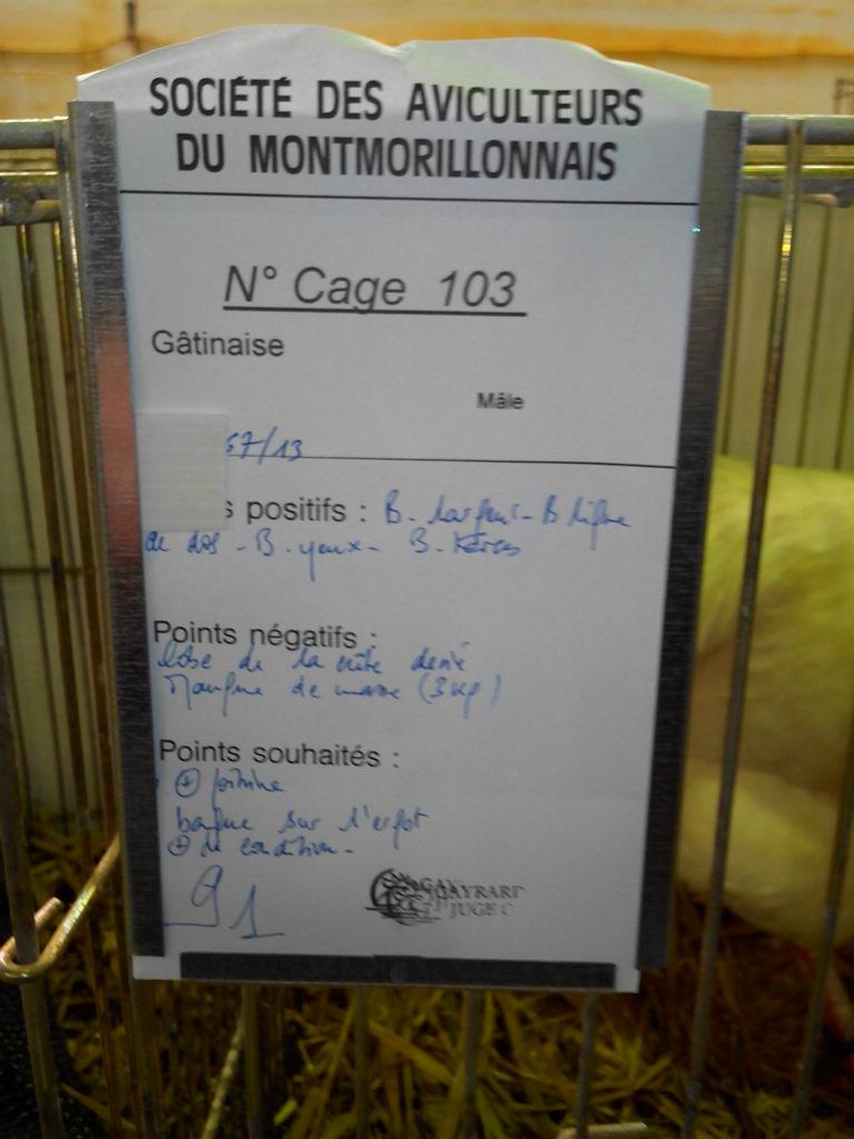 2014 - Exposition mars 2014 de Montmorillon (86) Img_2242