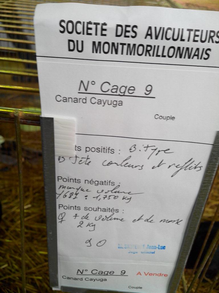 2014 - Exposition mars 2014 de Montmorillon (86) Img_2332