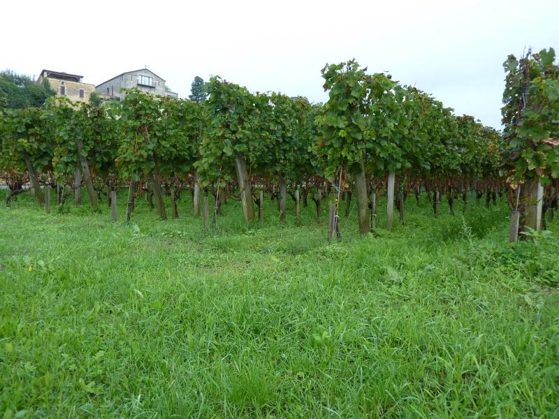 2013 à Bordeaux P1030317