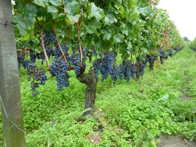 2013 à Bordeaux P1030417