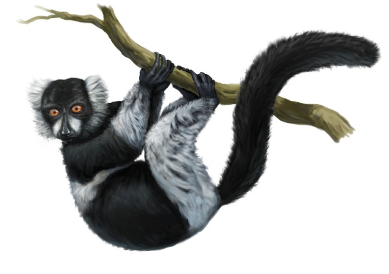 Seb, illustration animalière et documentaire Vari10
