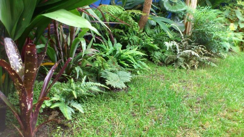 Un petit tour dans mon jardin 11488511