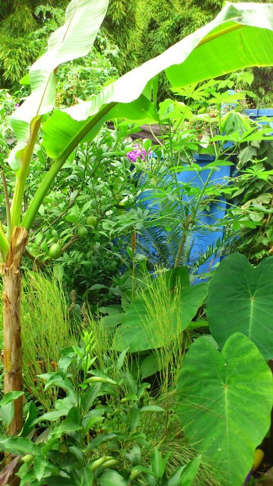 Un petit tour dans mon jardin 11850211
