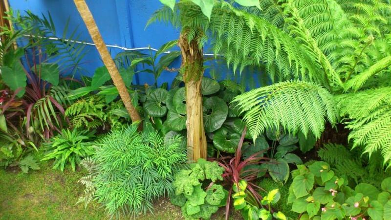 Un petit tour dans mon jardin 12300411