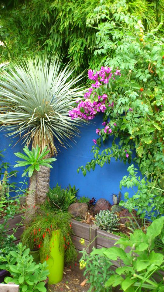 Un petit tour dans mon jardin 12389111