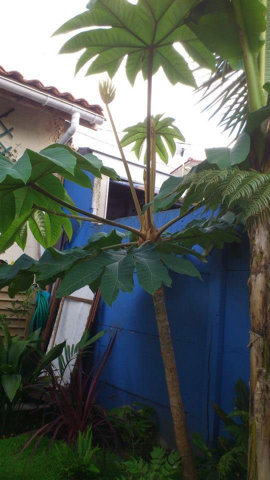 Un petit tour dans mon jardin 94229211