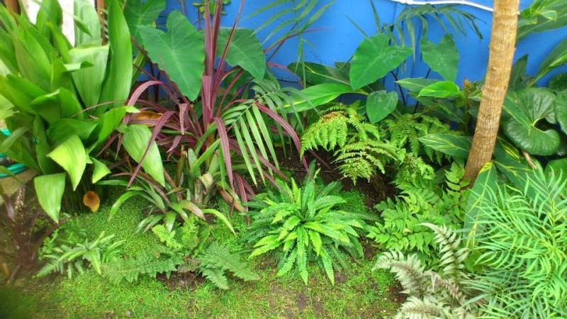 Un petit tour dans mon jardin 97180611