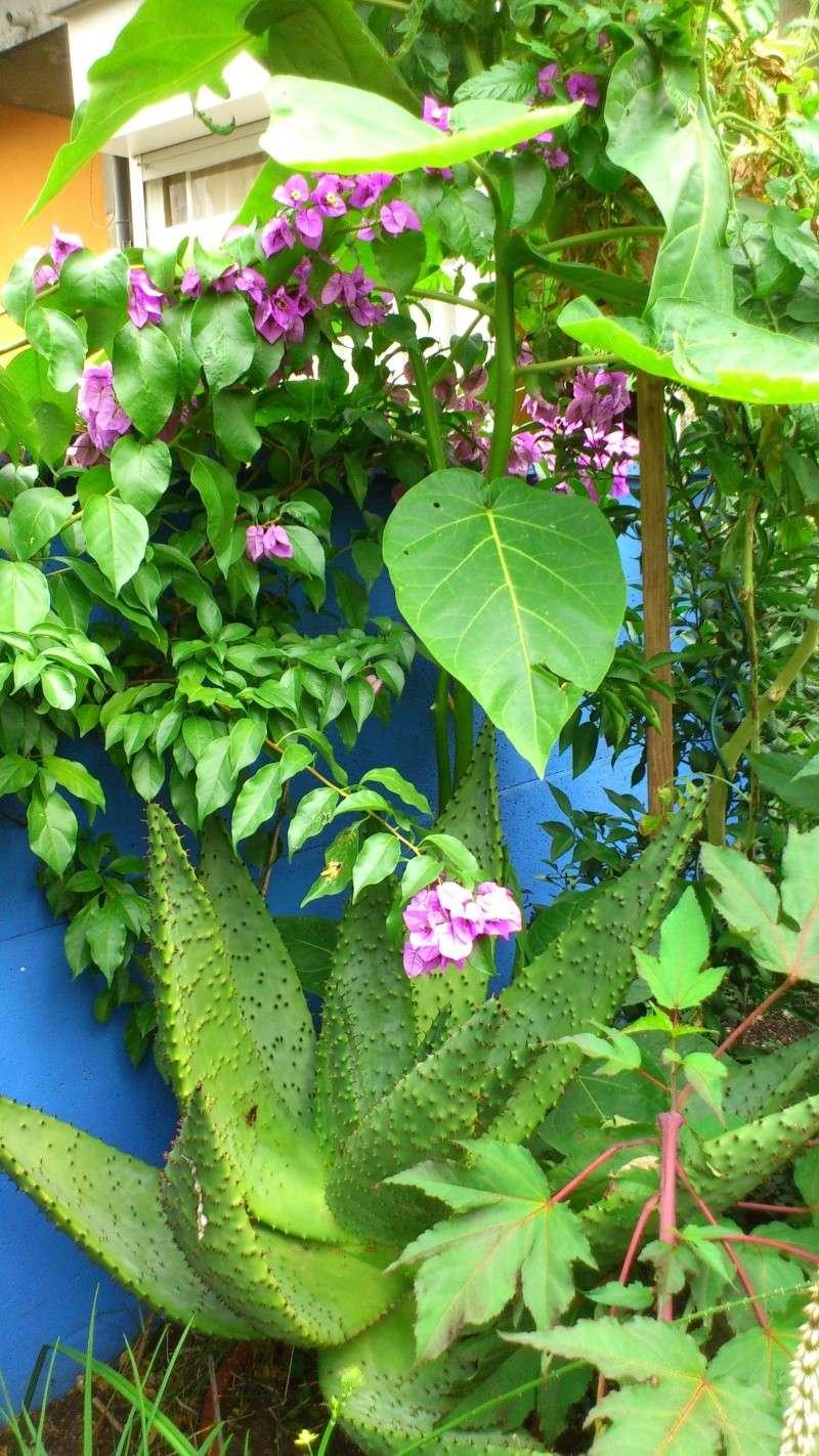 Un petit tour dans mon jardin Dsc_4813
