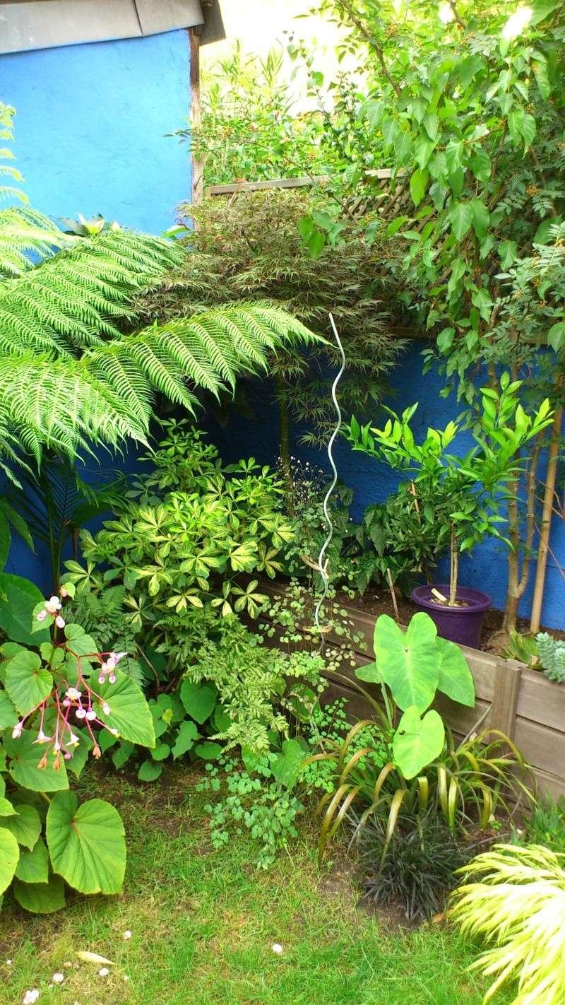 Un petit tour dans mon jardin Dsc_4910