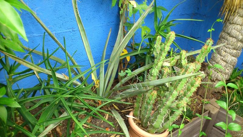 Un petit tour dans mon jardin Dsc_4911