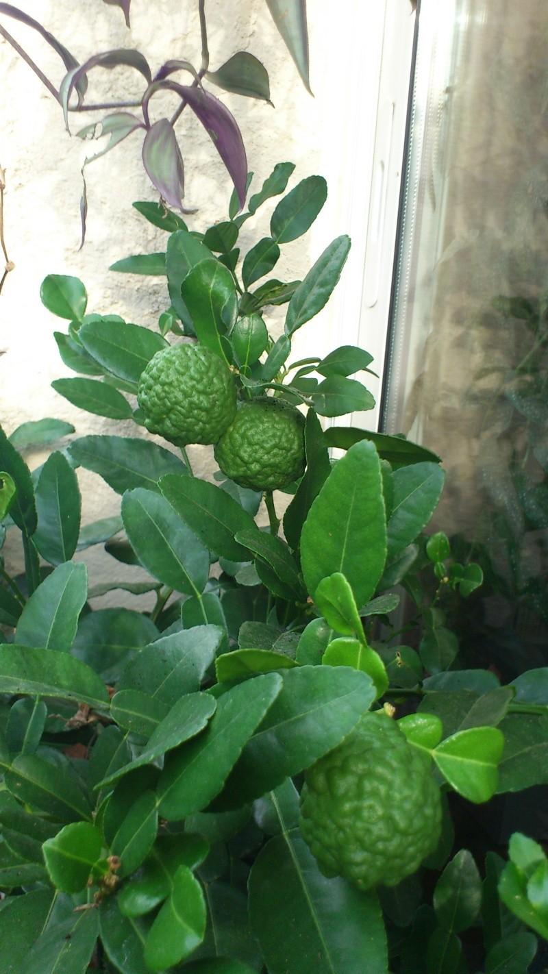 Un petit tour dans mon jardin Dsc_5515
