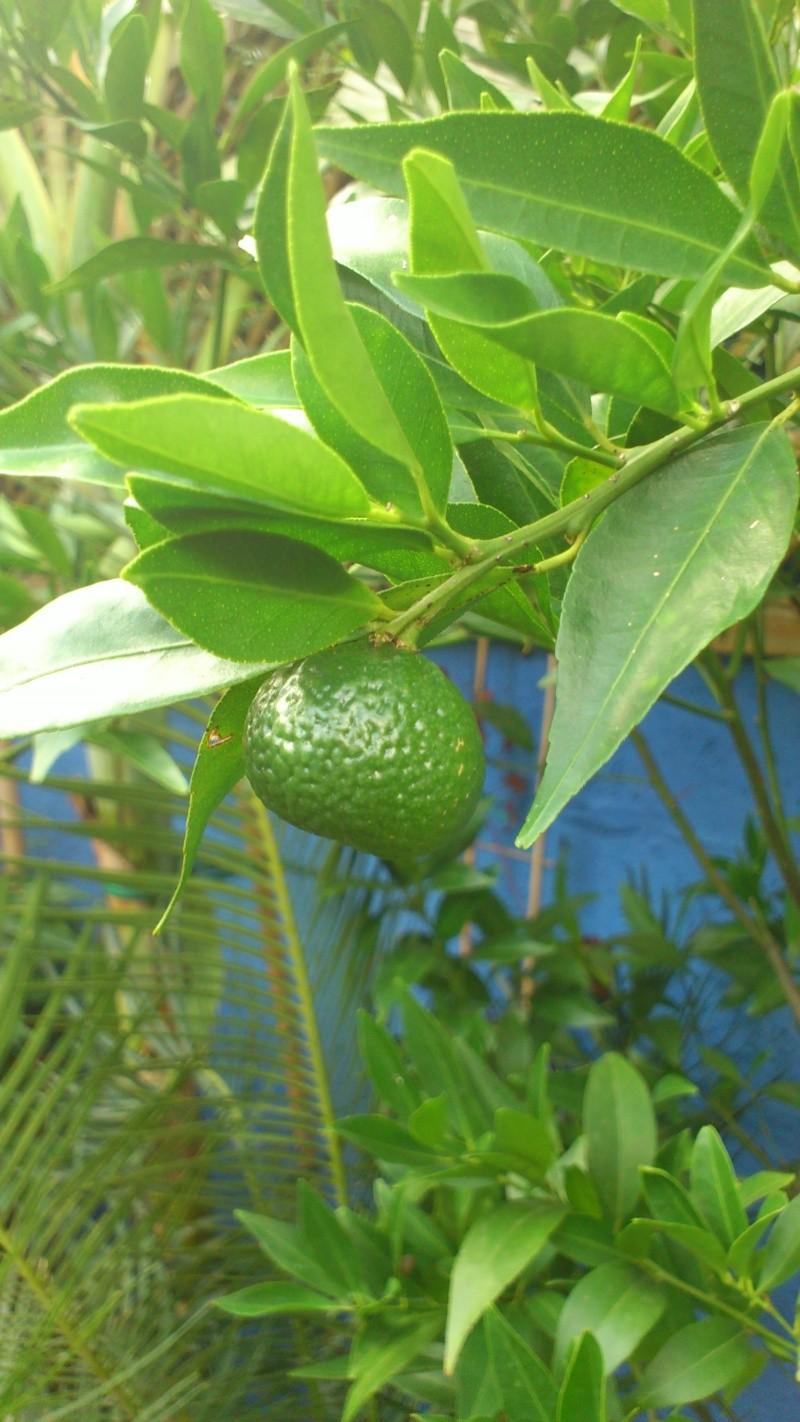 Un petit tour dans mon jardin Dsc_5632