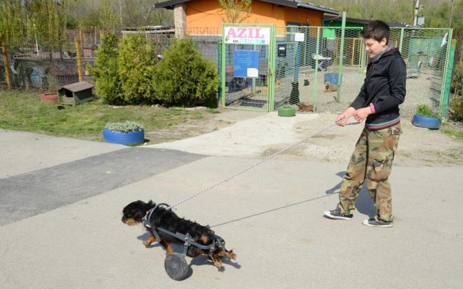 Nepokretni psi, uz kolica, dobili su šansu za novi život 11228510