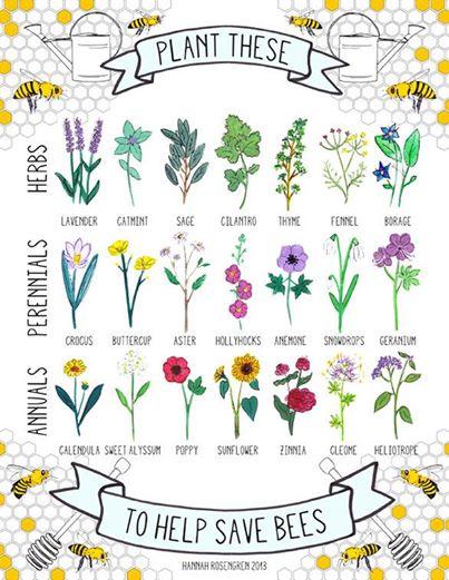 Manje pčela ,manje nas... - Page 2 16228310