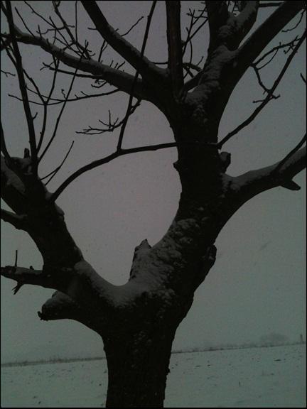Motiv fotografiranja: Zima i snijeg - Page 3 2014-014