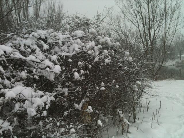 Motiv fotografiranja: Zima i snijeg - Page 3 2014-015