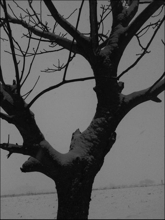 Motiv fotografiranja: Crno-bijela fotografija - Page 2 2014-017